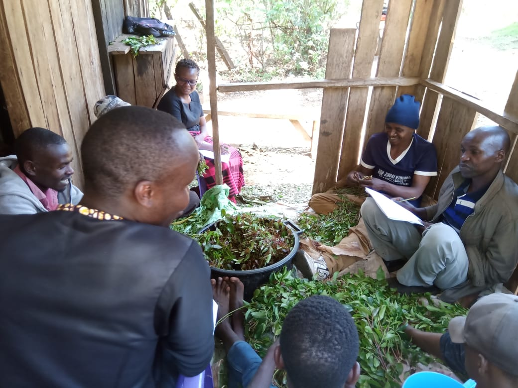 Male session in miraa den